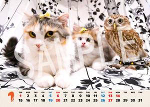 ネコとフクロウ__139