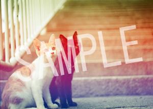 猫とビートルズ__223