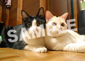 猫とビートルズ__371