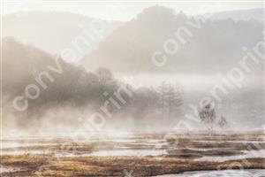 尾瀬上田代の朝霧