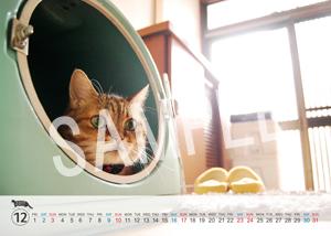 猫とビートルズ__108