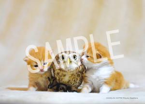 ネコとフクロウ__012
