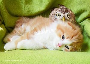 ネコとフクロウ__205