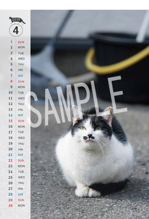猫とビートルズ__149