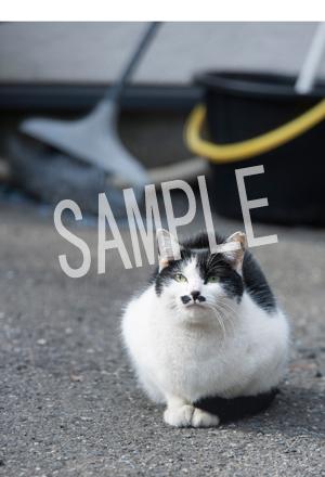 猫とビートルズ__144