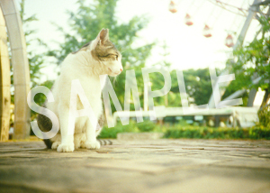 猫とビートルズ__74
