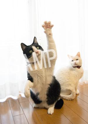 猫とビートルズ__135