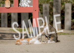 猫とビートルズ__154