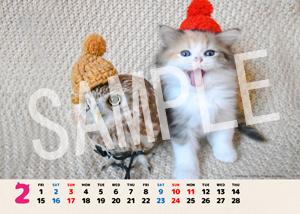 ネコとフクロウ__160