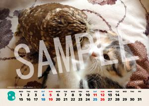 ネコとフクロウ__043