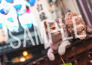 ネコとフクロウ__065