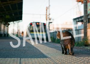 猫とビートルズ__241