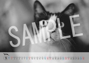 猫とビートルズ__197