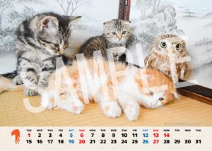 ネコとフクロウ__136