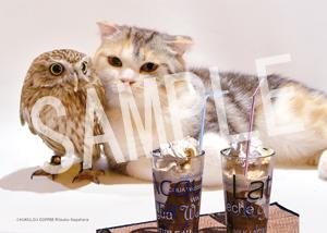 ネコとフクロウ__033