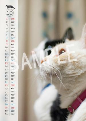 猫とビートルズ__90