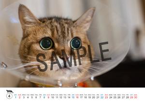 猫とビートルズ__27