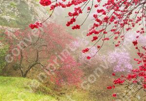 御荷鉾山のミツバツツジと紅梅