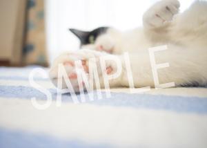 猫とビートルズ__182