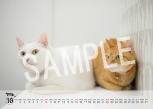 猫とビートルズ__87