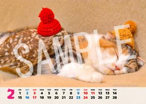 ネコとフクロウ__155