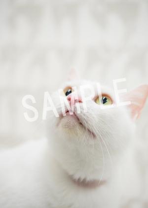 猫とビートルズ__83