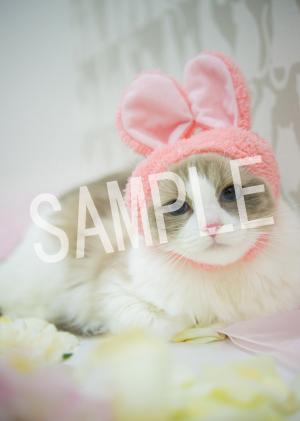 猫とビートルズ__201