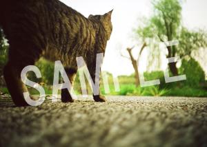 猫とビートルズ__33