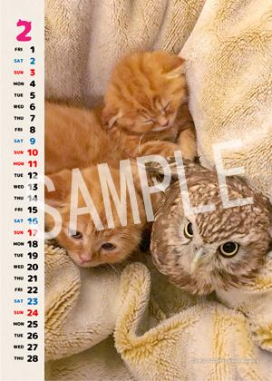 ネコとフクロウ__164