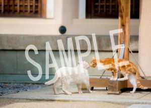 猫とビートルズ__153
