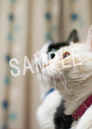 猫とビートルズ__85