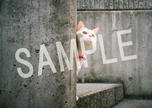 猫とビートルズ__34
