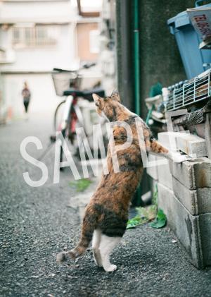 猫とビートルズ__234