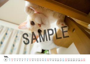 猫とビートルズ__28