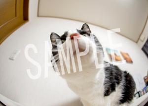 猫とビートルズ__143