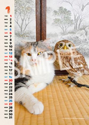 ネコとフクロウ__142