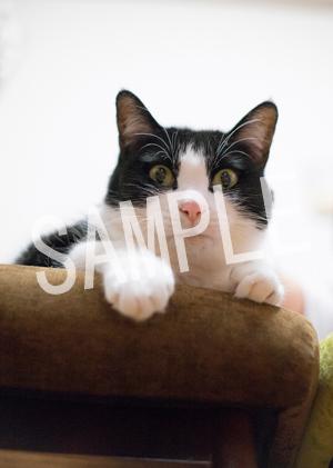 猫とビートルズ__215