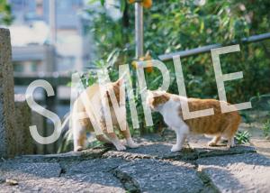 猫とビートルズ__251
