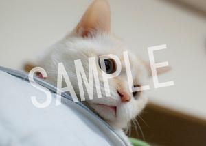 猫とビートルズ__183