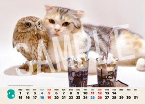 ネコとフクロウ__041