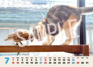 ネコとフクロウ__022