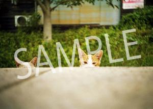猫とビートルズ__14