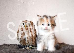 ネコとフクロウ__148