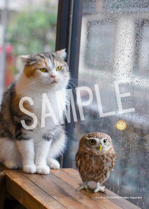 ネコとフクロウ__003