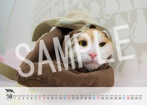 猫とビートルズ__209