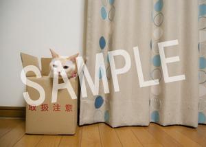 猫とビートルズ__64