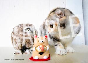 ネコとフクロウ__131