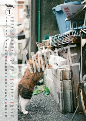 猫とビートルズ__240