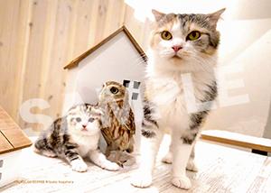 ネコとフクロウ__192