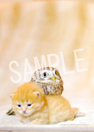 ネコとフクロウ__094